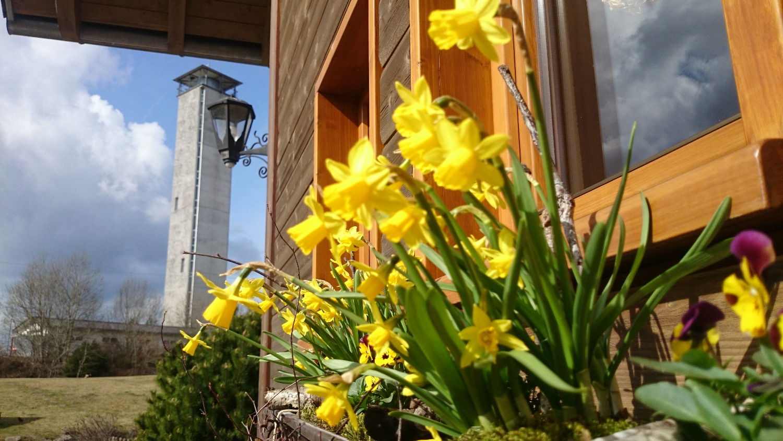Frühling Tagungslocation